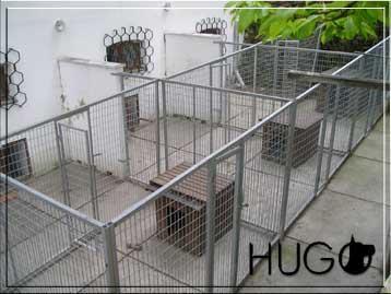 Dog run in the pen