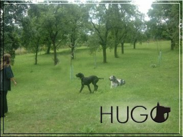 Dog run in an enclosed orchard