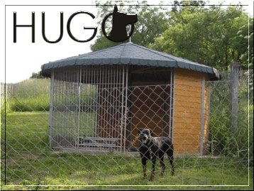 Pict. - Hotel Hugo for Dogs
